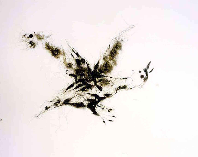 Lionel Sabatté,Poussière volatile du 4 août, 2013,poussière et vernis sur papier, 65 x 50 cm