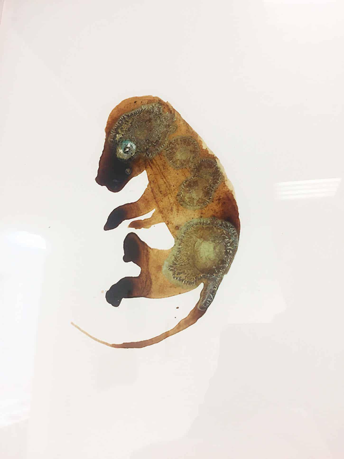 Espace A VENDRE, exposition collective, So Select!Lionel Sabatté Fœtus d'éléphant rouillé, 2016Solution à base de fer et bronze oxydés et acrylique sur papier Arches, 26 x 36 cm.